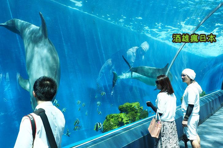[橫濱情侶景點]八景島海島樂園-日本最大水族館 @交通 票價 釣魚 海豚秀
